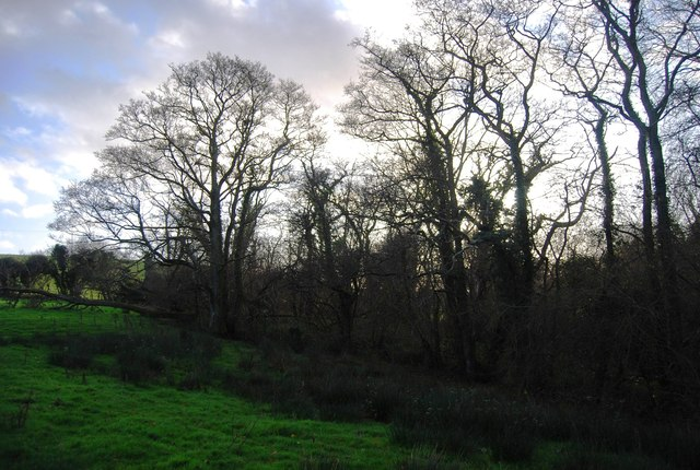 Small woodland near Lower Coombe