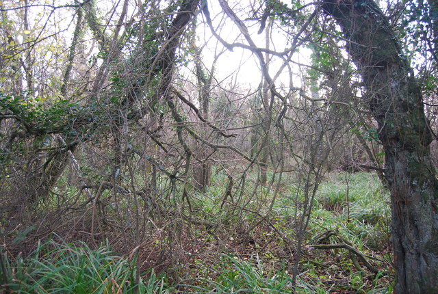 Woodland near Lower Coombe