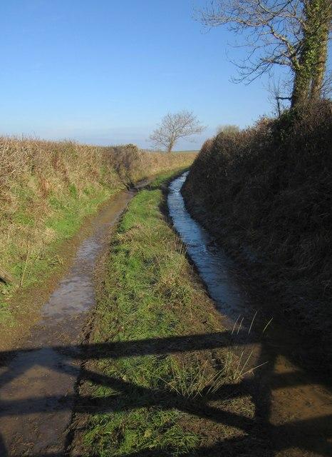 Field access track, Broadwood Down