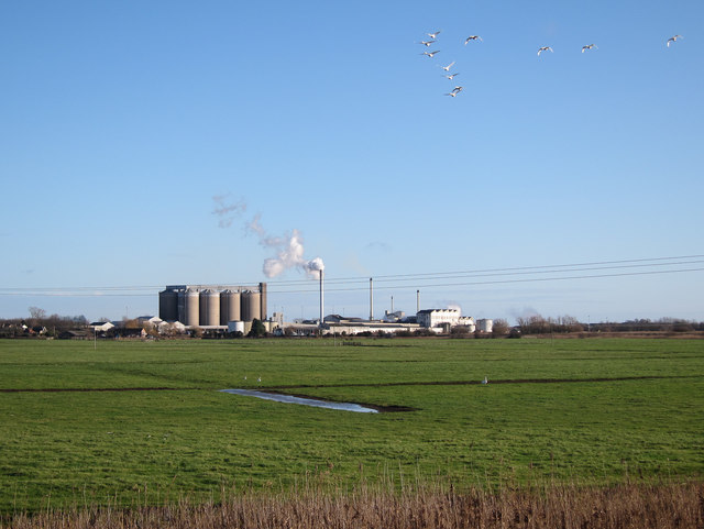 Swans over Cantley Marshes