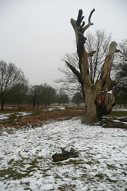 Tree near Pond Plantation