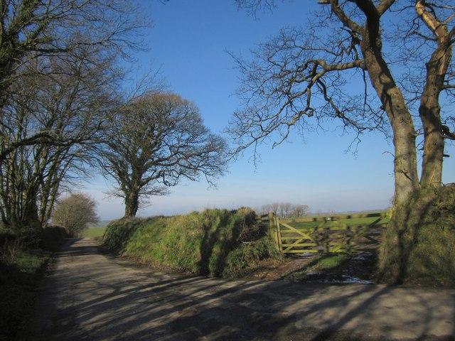 Lane near Broadwoodwidger