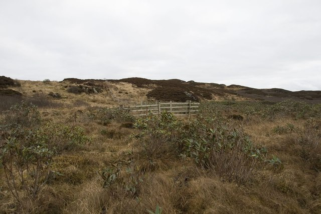 Rhododendron and Fences, Cnoc Dubh, Islay