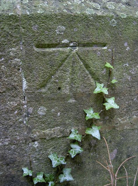 An ivy boltmark