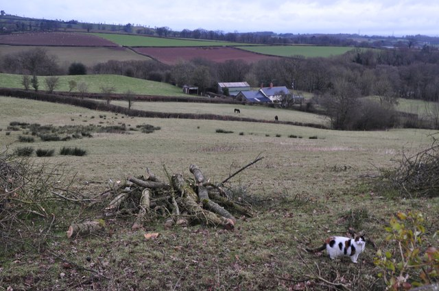 Mid Devon : Grassy Field & Countryside