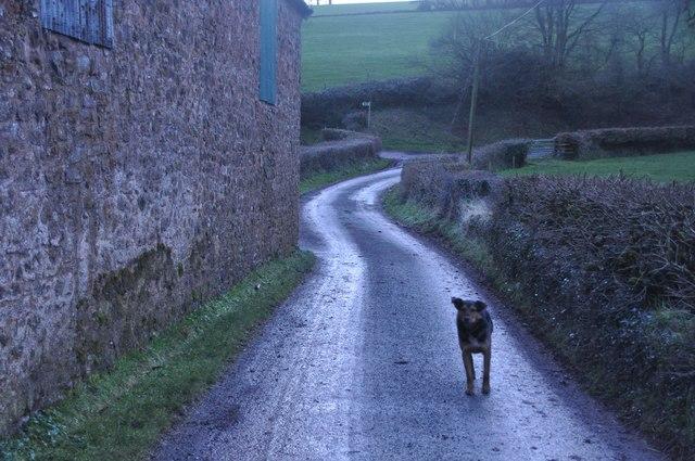Mid Devon : Country Road & Dog