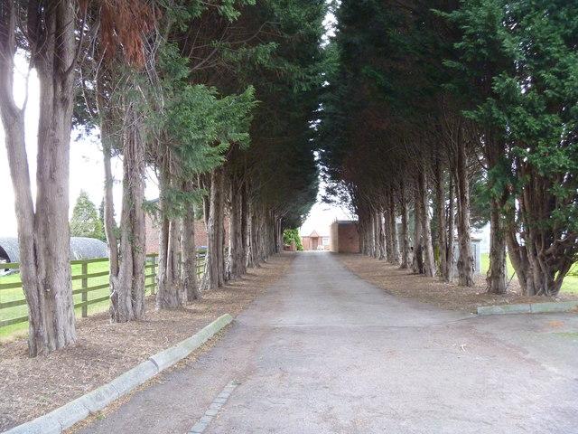 Entrance avenue
