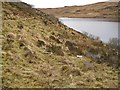 NG3939 : Planted hillside above Loch Duagrich by Richard Dorrell