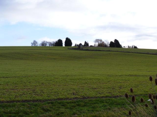 Nardey Bush Hill