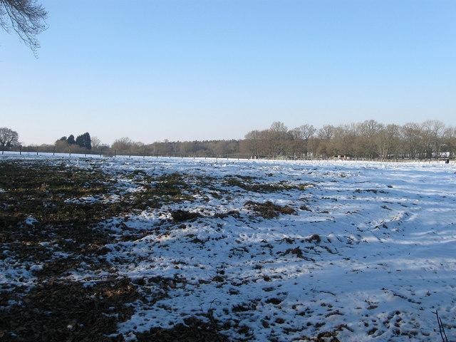 Birch Lane Field/Six Acres