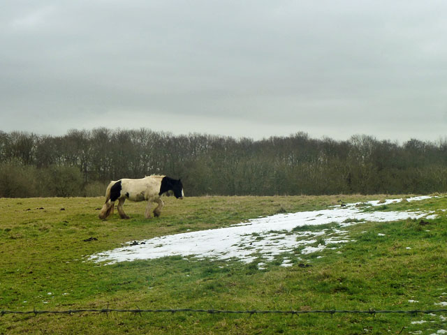 Horse and snow patch