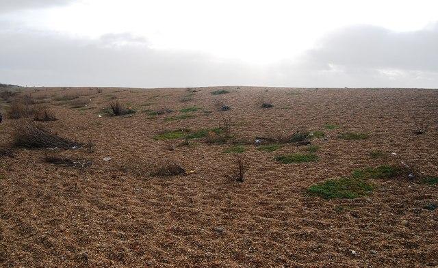 Patchy vegetation, Chesil Beach
