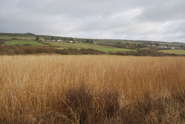Reed beds, West Bexington Reserve