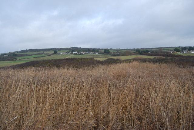 Reeds, West Bexington