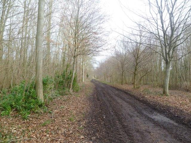 Moor Crichel, estate road