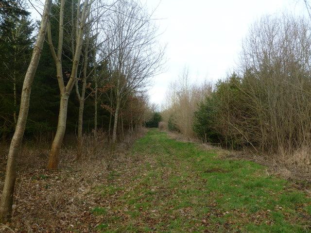 Moor Crichel, forestry track