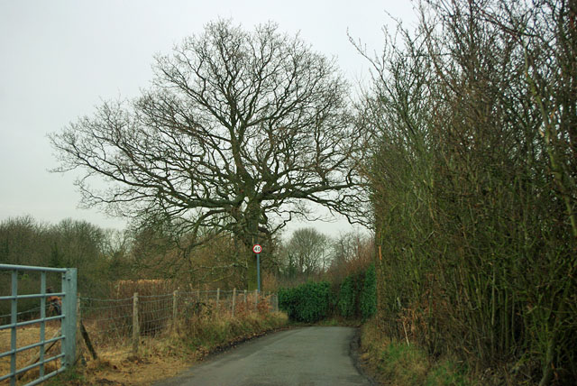 Skibbs Lane - 40 limit