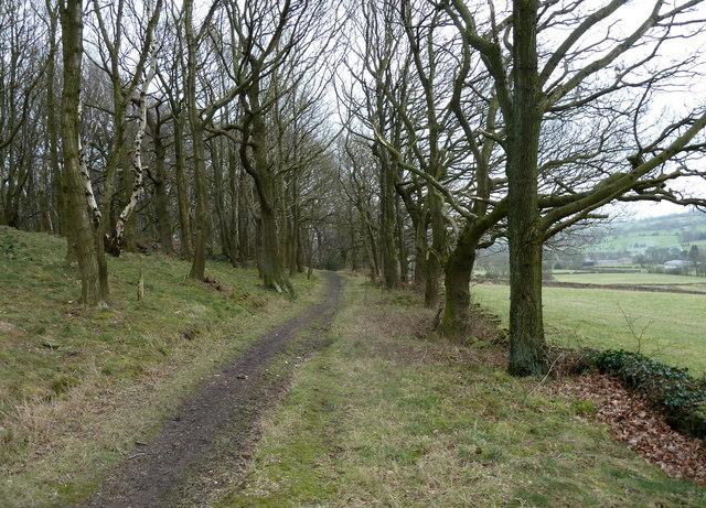 Woodland edge footpath