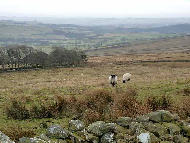 View over Redesdale