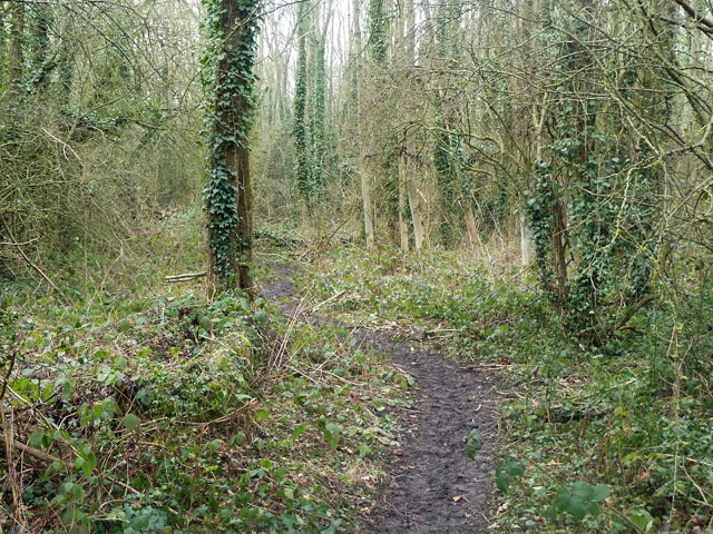 Small woodland path