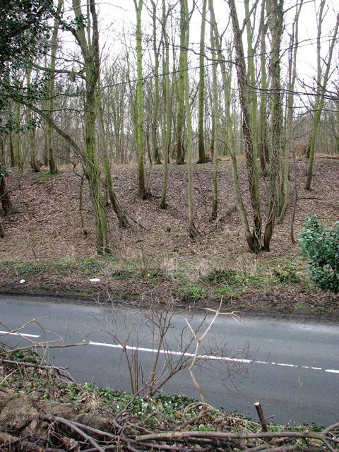 Brightwell Hill Plantation