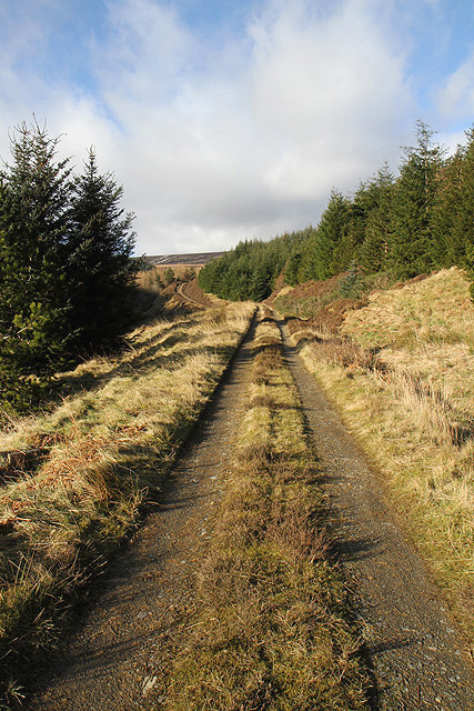A forestry road at Bught Rig