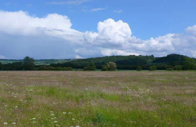 Fields near Little Buckland