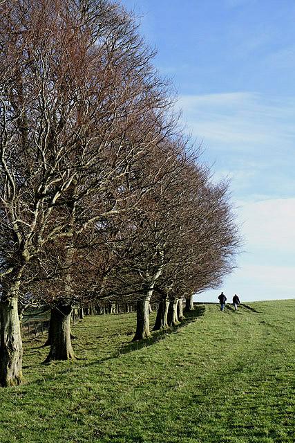 Walking on Selkirk Common