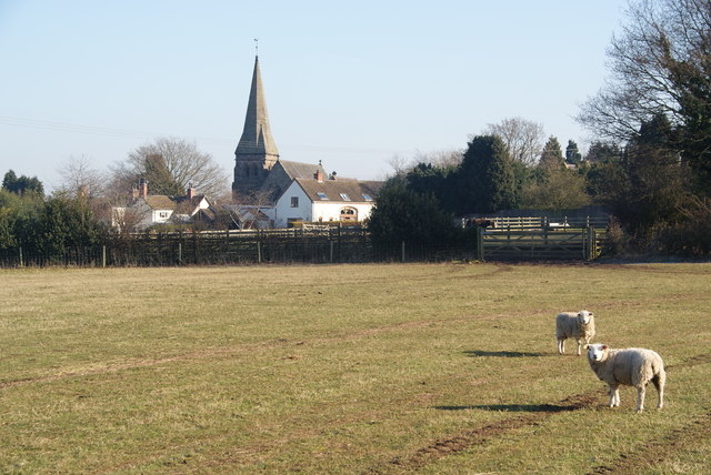Sheep watching my approach to Bednall