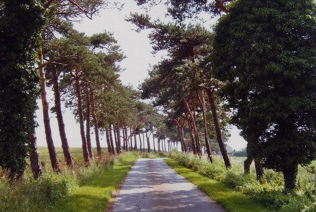 Access road to Herne Poplar, Toddington, Beds.