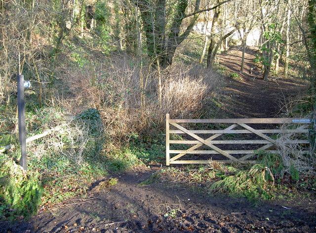 Bridle path through Thorn Wood