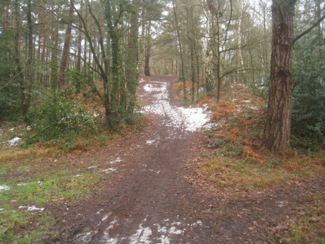 Path up Pyestock Hill