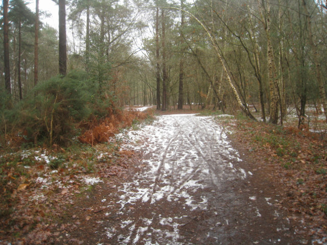 Path on Pyestock Hill