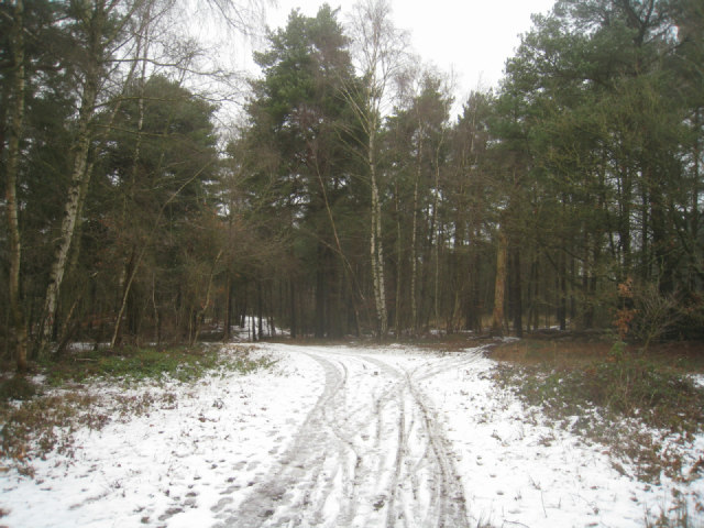 Coniferous woodland - Pyestock Hill