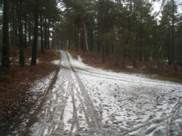 Bridleway to main road