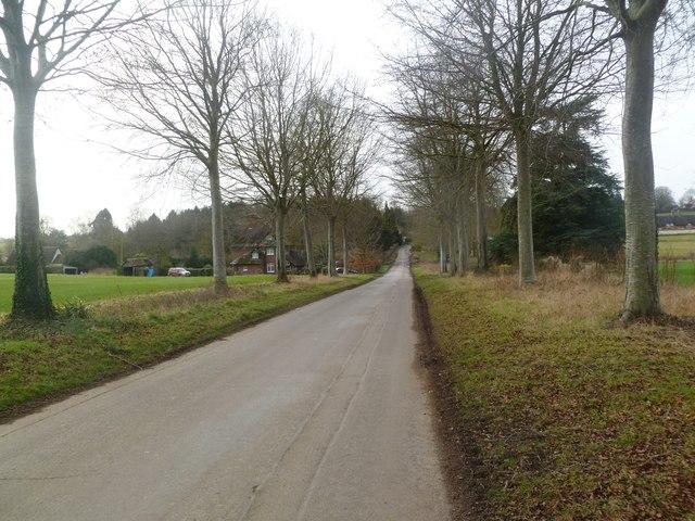Moor Crichel, country road