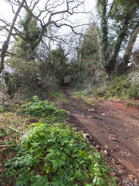 Track leading off Shepherds Lane