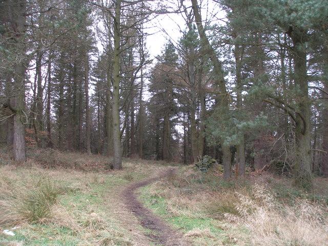 Permissive bridleway enters the woods