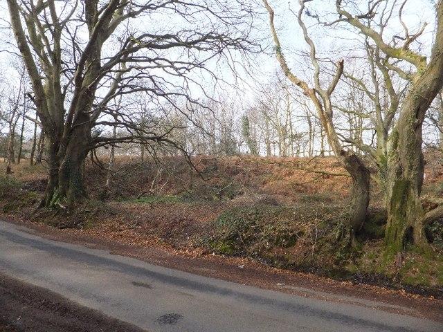 Woodland near Teign View farm