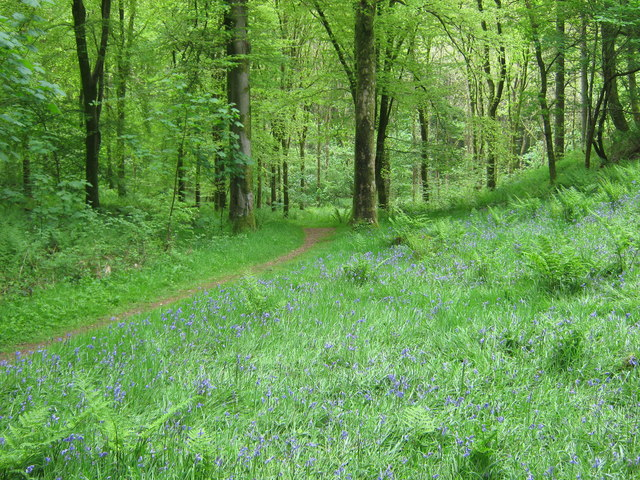 A path in Cally Woods