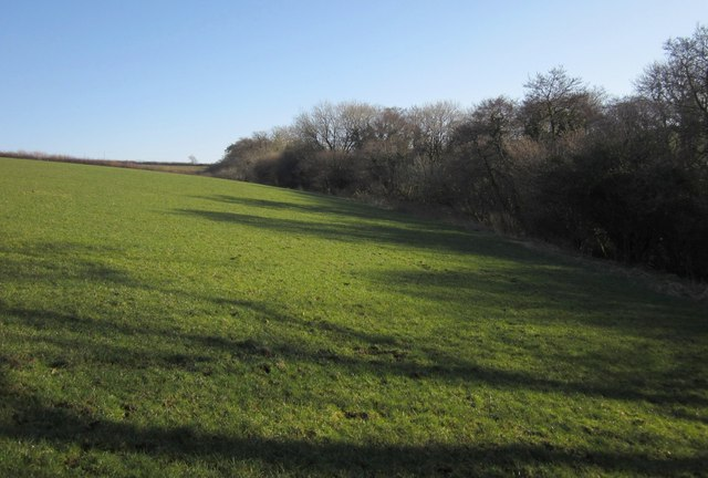Woodland edge near Bradaford