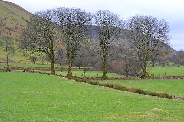 Trees near Blaenycwm