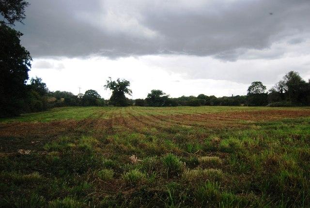 Field by Hazel Wood