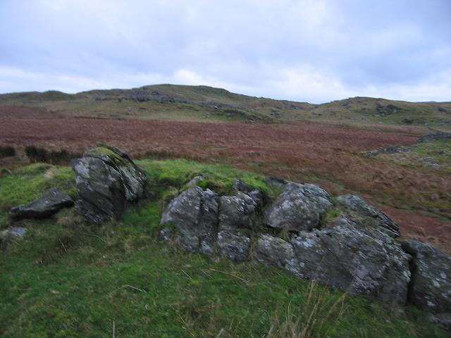 Boggy patch south of Llyn Hir