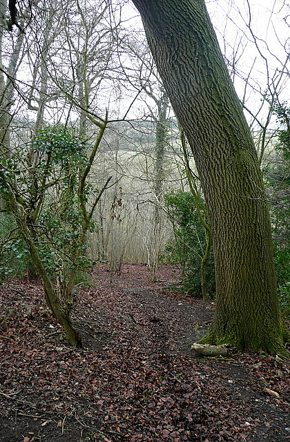 In Sunter's Wood