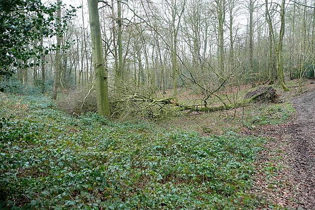 In Sunter's Wood