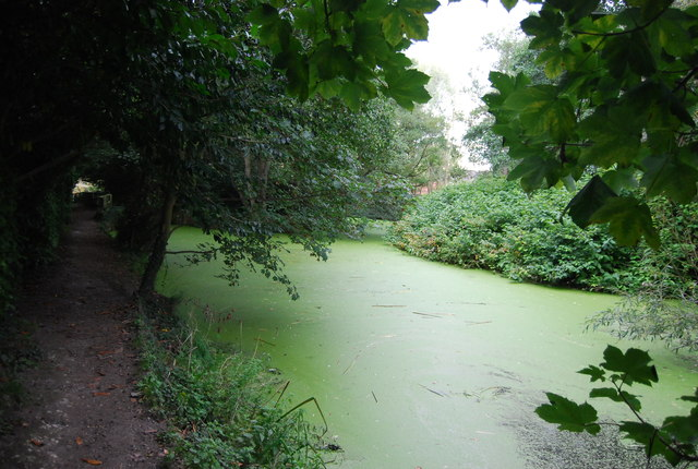 Green algae, River Gipping