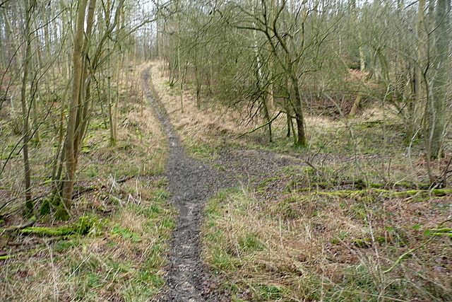 Path in High Barber's Wood