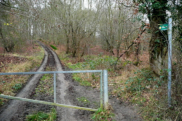 Path into Spring Coppice