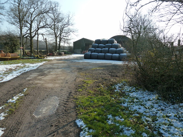 Silage bales at Guesses Farm